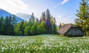primavera fiori montagna