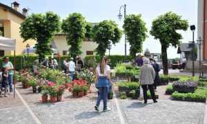 giardinidea gignese 2017