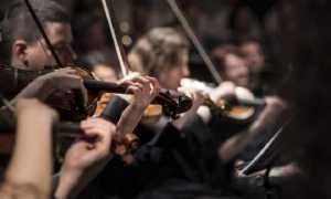 musica violini